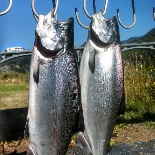 Summer brought these big salmon in.